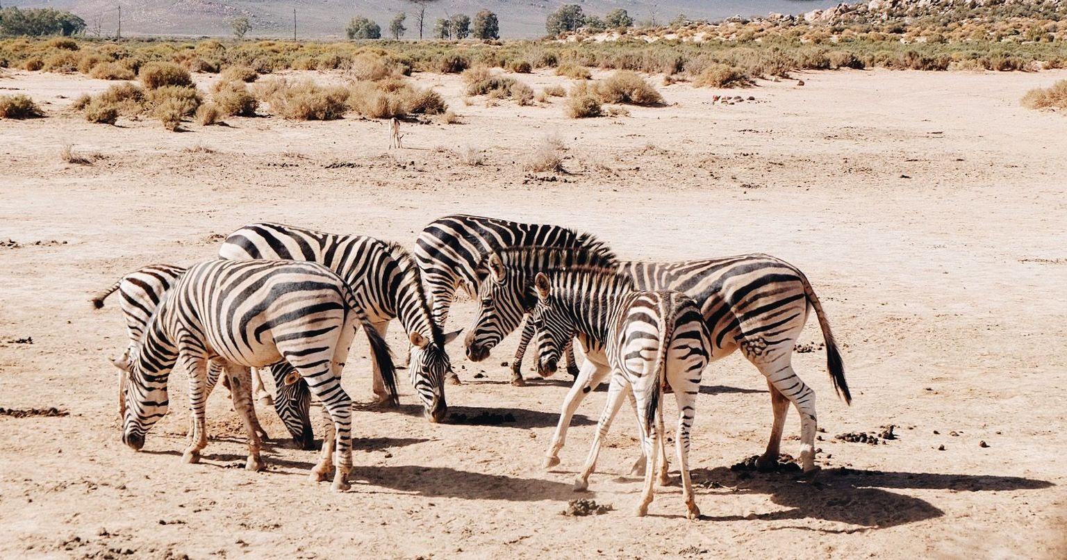 MAIS FOTOS, Safári pela Reserva de Vida Selvagem Aquila, saindo da Cidade do Cabo