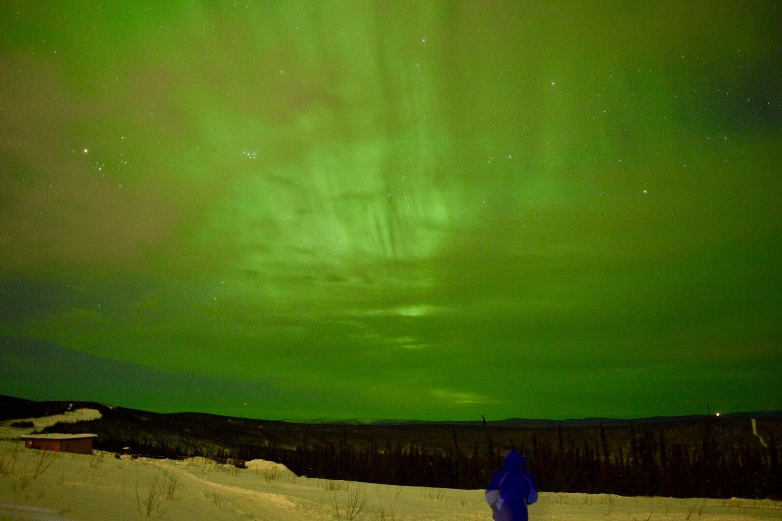 MÁS FOTOS, Northern Lights Viewing including Dinner and 1-Hour Dog Sledding