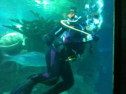 Swimming with stingrays - June 2011