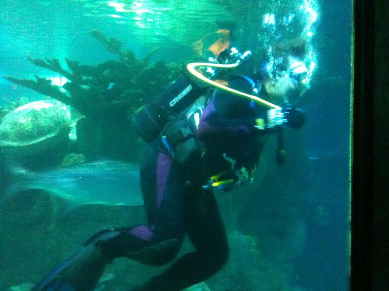Swimming with stingrays - Boston