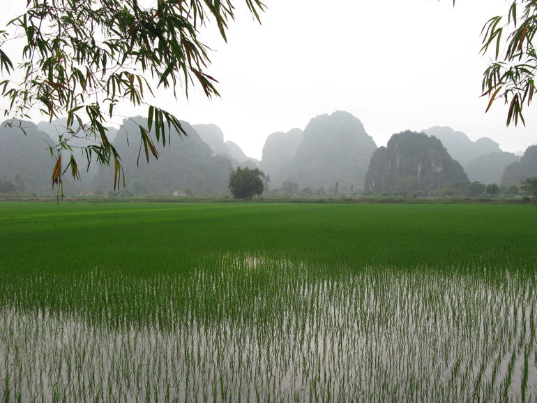 Hoa Lu Tam Coc Full-Day DELUXE Tour Including BUFFET LUNCH & River Boat Ride photo 44