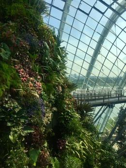 Cloud Forest Gardens by the Bay. , Eike K - November 2017