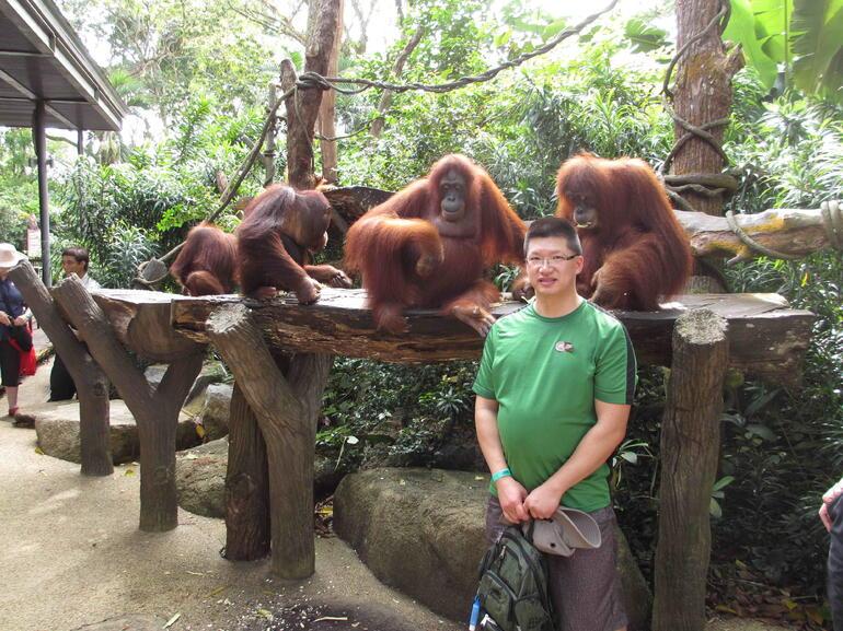 Breakfast Near Orangutans - Singapore