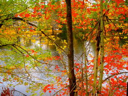 colors of fall , munni - October 2012