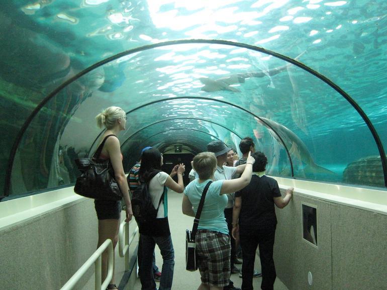 visite-tunnel-de-dugong-aquarium-de-sydney