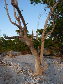 Some cool trees are out in the Everglades., kellythepea - May 2014