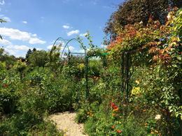 garden , Thuy V - July 2014
