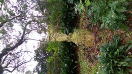 Garden Statue on the grounds of Houmas House. , Jodi H - February 2016