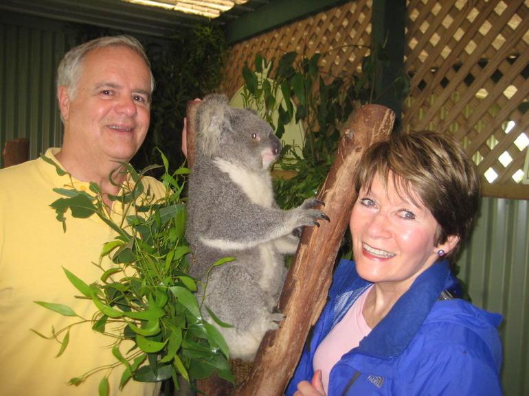 Koala at Featherly Wildlife Center - Sydney