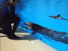 Dolphins - September 2011