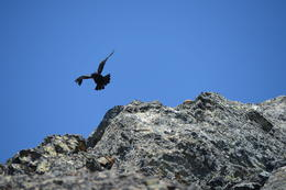 Eagle siting!, Jeff - August 2013