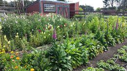 Wildflowers at Heidrun Meadery - April 2015