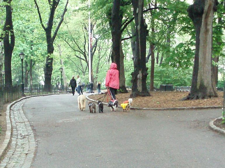 Central Park Dog Walker - New York City