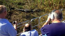 Florida Everglades Airboat Tour and Alligator Encounter - October 2013