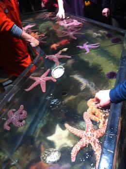 You can touch the sea urchins and starfish, Laura All Over - December 2013