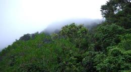 Rainforest Tour - March 2012