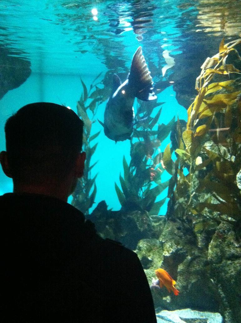 Aquarium - San Francisco