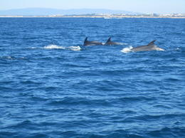 Dolphins swim right alongside the boat! , Saundra B - July 2011