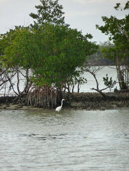One of the many birds we saw in the Everglades., kellythepea - May 2014