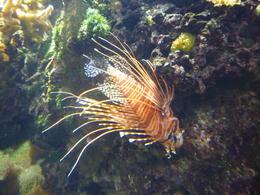 in the aquarium!, Irene - October 2013