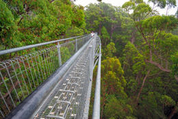 Treetop walk path, Valley of the Giants - May 2011