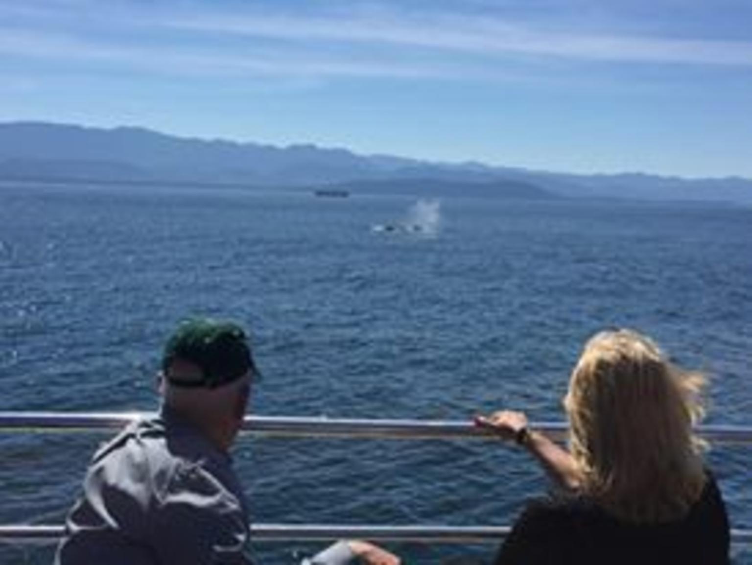 MÁS FOTOS, Victoria Whale Watch Tour