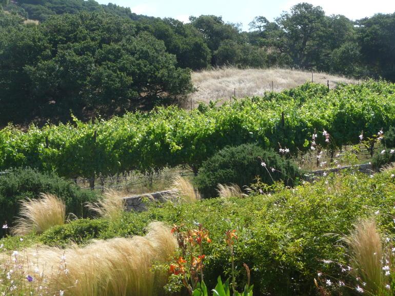 Lush green vines! - San Francisco