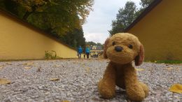 Our eager little travelling mascot dog was dying to be part of the action at Hellbrun Castle where the Sound of Music Pavilion is now situated! , Derek K - October 2015