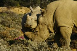 Rhino and son - May 2016