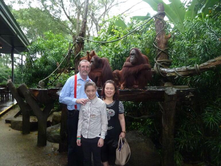 Orangutans at Singapore Zoo - Singapore