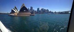 Sydney Harbour , Mum - January 2016
