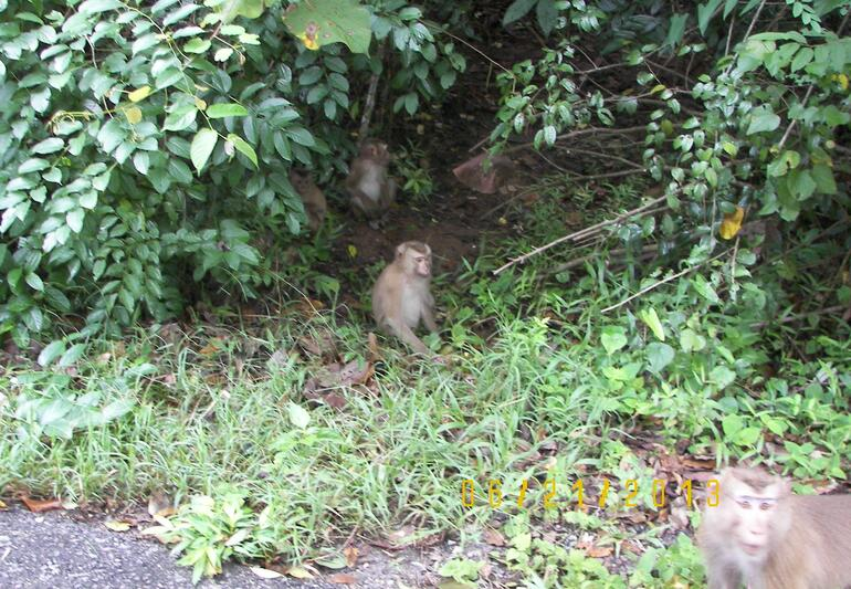 Monkey Business - Bangkok