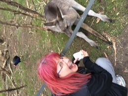 Feeding my kangaroo friend at Moonlight Sanctuary , Jessica R - July 2016