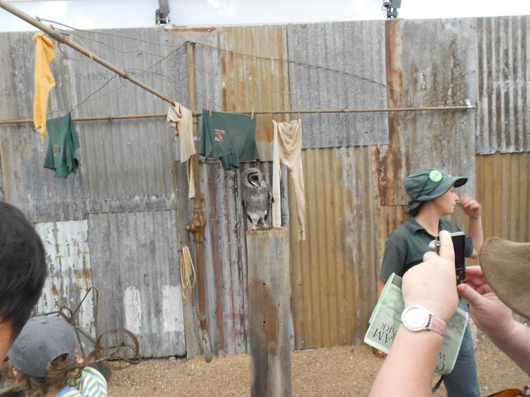 OWL @ CAVERSHAM WILDLIFE PARK - Perth