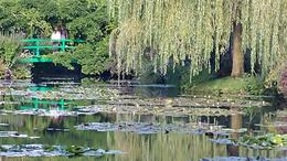 Monet's garden that contained this classic pond. , kibiger - December 2017