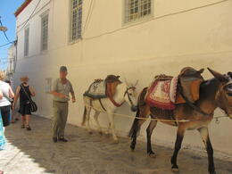 There are no cars on Hydra, only donkey's. , Robyn - July 2011