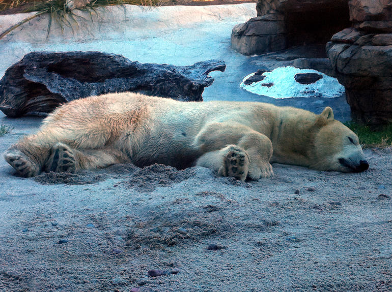 Lazy Days at San Diego Zoo - San Diego