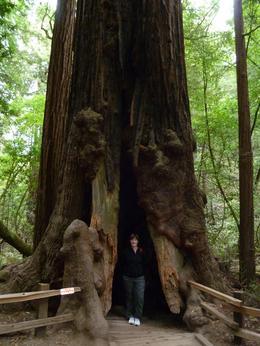 Giant Redwoods, Leanne T - September 2010