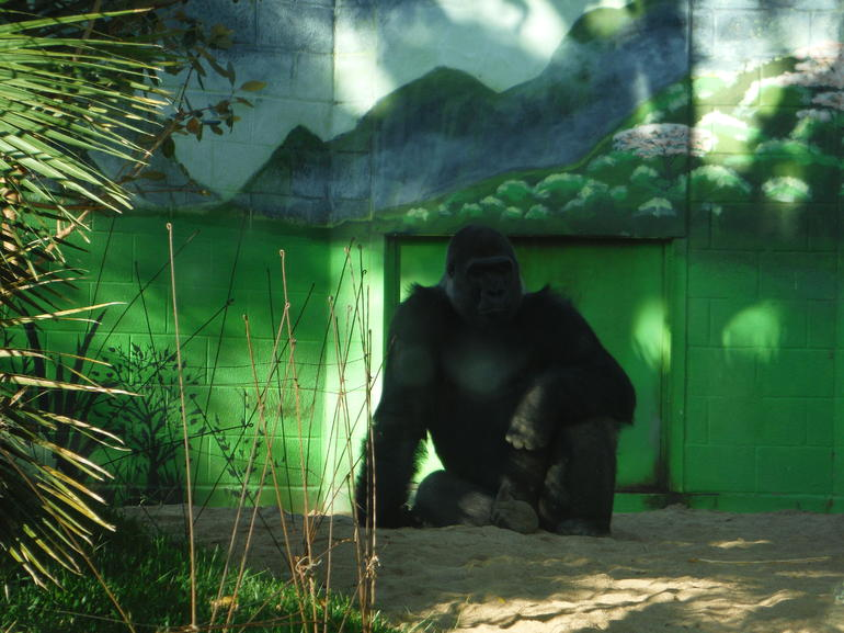 Skip the Line: San Diego Zoo Ticket photo 14