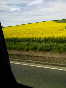 Do you use canola oil? These yellow fields give us the oil. , Sandra I - July 2017