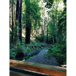 Muir Woods , Priyankar R - September 2017