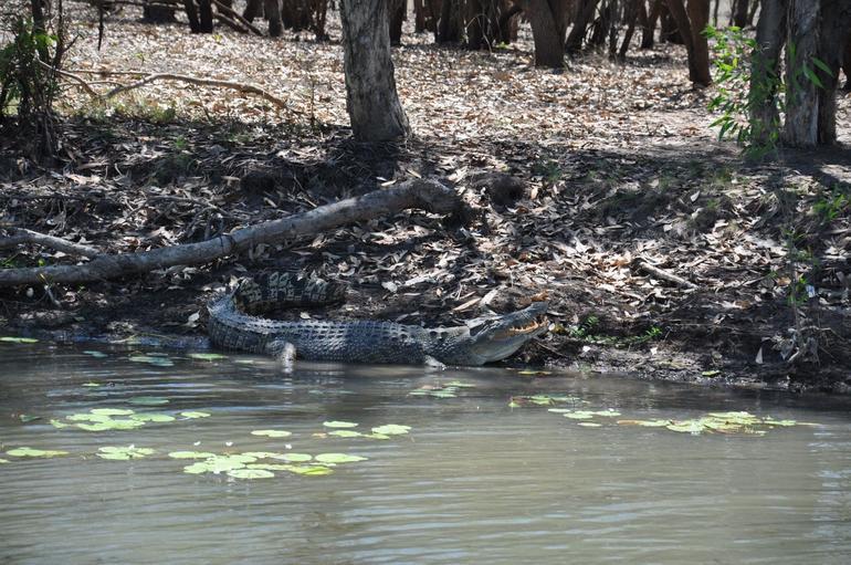 Croc! - Darwin