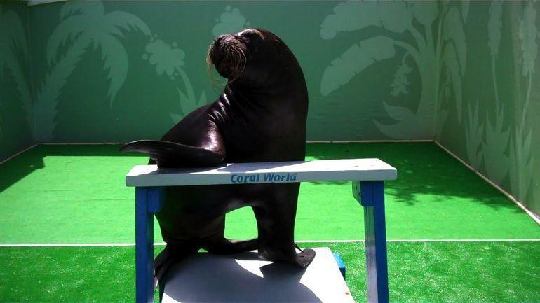 Sea Lion at Coral World Ocean Park - St Thomas