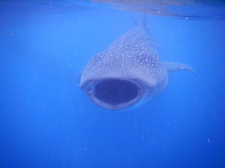 Whale Sharks tour in Cancun & Riviera Maya: Small-Group Eco Friendly photo 15