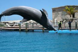 Dolphin show at Ocean World - high dive! - September 2011