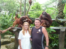 Hanging with the Orangutans - July 2014