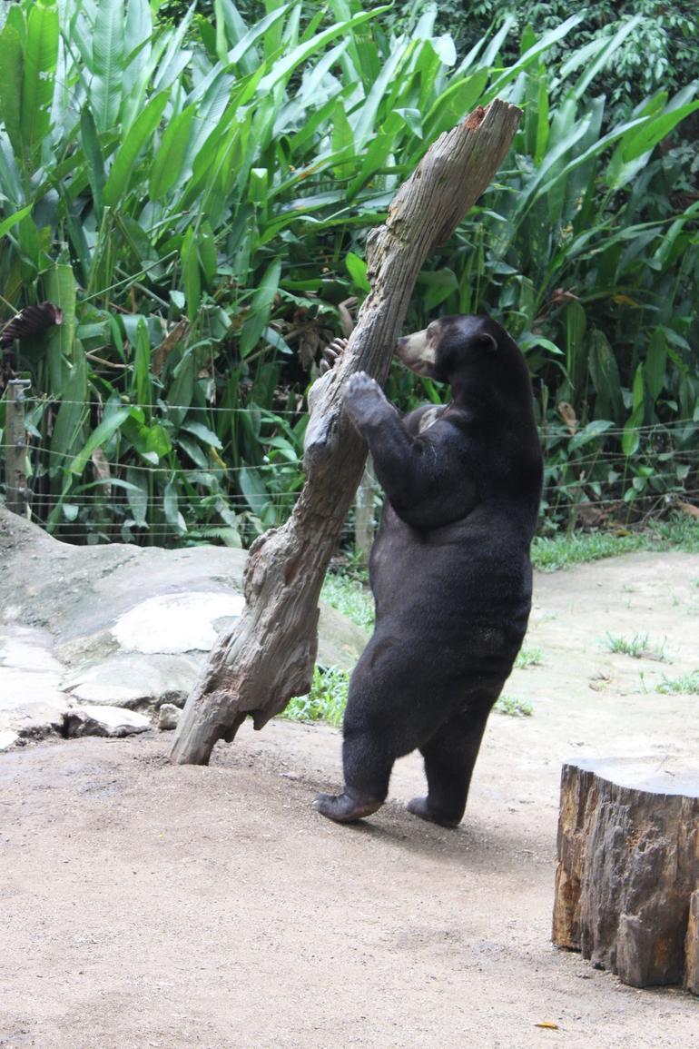 Sun Bear at Deerland - Kuala Lumpur