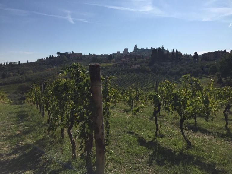 Vineyard Tour and Tasting with Lunch or Dinner