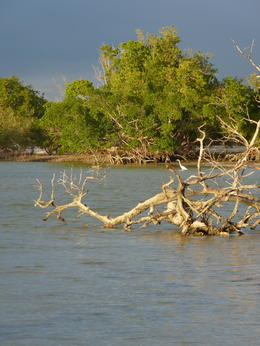 A scene from kayaking in the Everglades - lots of pretty little islands., kellythepea - May 2014