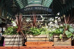 Market at Covent Gardens , deeweisz - November 2017